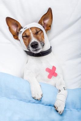 Notfallhund
